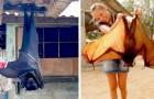 La volpe volante è uno dei pipistrelli più grandi che esistano in Natura: ha un'apertura alare di quasi 2 metri