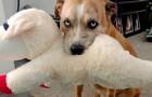Deze zorgzame hond voedt zijn favoriete knuffeldier alsof hij van vlees en bloed is