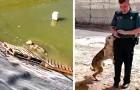 Um cachorro que esteve prestes a se afogar em um tanque, não consegue parar de