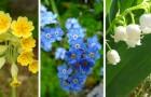 9 piante straordinarie ideali per impreziosire le zone in ombra del giardino