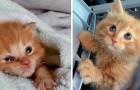 Salvam a vida de um gatinho para depois colocá-lo em adoção, mas o bichano