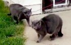 Frau entdeckt, wie ihre Katze mit einer anderen Katze spielt, die ihr zum Verwechseln ähnlich ist.