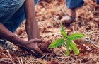 Non tutti sanno che esiste un motore di ricerca che usa i suoi soldi per piantare alberi: ne ha piantati oltre 100 milioni in tutto il mondo
