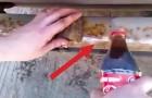 Coloca Coca-Cola e deixa agir: em poucos segundos acontece uma magia!