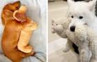 10 foto's tonen de oneindige tederheid die dieren in ons leven kunnen brengen