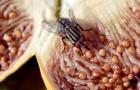 Alcune cose che possono accadere nel momento in cui una mosca si posa sul vostro cibo