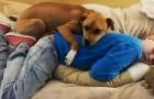 Ein autistischer Junge trifft einen Hund mit einer Vergangenheit voller Misshandlungen: Für beide beginnt ein neues Leben