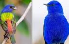 10 fåglar från hela världen som är fulla av färg och form