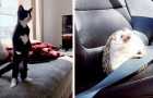 12 pets that have gone out of their way to imitate other species with rather hilarious results