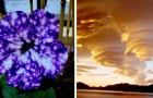12 immagini che incoronano Madre Natura come campionessa di fantasia e creatività