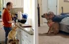12 pères qui disaient ne pas vouloir d'un animal de compagnie et maintenant ils en sont totalement dépendants