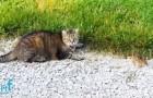 Um gato capturou um ótimo almoço, mas não contava com a coragem da sua presa...