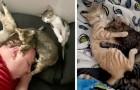 13 persone che hanno fotografato i loro gatti addormentati insieme nelle posizioni più assurde