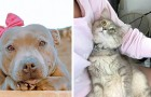 13 Male, dass Hunde und Katzen Blicke voller Liebe geschenkt haben, die ihre Menschen rührten