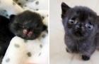 En svart katt charmar alla med sitt gulliga utseende, hon hittades ensam i en övergiven gränd