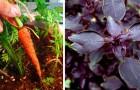6 piante da coltivare sul balcone senza difficoltà per avere erbe e verdure fresche in cucina