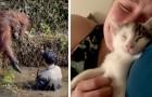 12 volte in cui i nostri amici animali sono riusciti ad esprimere le emozioni più tenere e profonde