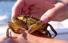 Gli animali marini non sono un passatempo per la spiaggia: l'ENPA elenca 6 motivi per evitare di catturarli per gioco