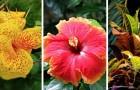 I consigli più utili per far crescere al meglio le piante tropicali in casa