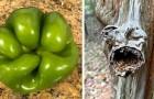 Pareidolie: 13 Beispiele, in denen Menschen Gesichter und Gegenstände dort erkannt haben, wo eigentlich keine waren