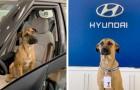 Een zwerfhond bezoekt elke dag de medewerkers van een dealer - uiteindelijk nemen ze hem aan en krijgt hij een badge