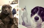 12 animaux de compagnie pris en flagrant délit par leurs maîtres dans des situations hilarantes et désastreuses