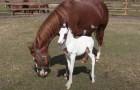 Vídeo de Cavalos