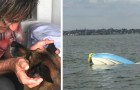 Tiene un grave accidente en el bote: su fiel perra nada por 11 horas para salvarle la vida