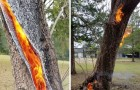 Un albero viene colpito da un fulmine e inizia a bruciare dall'interno: il filmato è inquietante