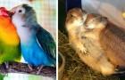 14 foto's laten zien dat ware liefde ook in de dierenwereld bestaat