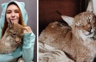 Questa ragazza ha salvato due linci da una