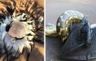 Australië: 13 foto's vatten enkele van de meest bizarre en gevaarlijke diersoorten voor mensen samen