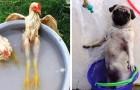 15 foto esilaranti di animali che hanno imparato a sopravvivere al caldo estivo molto meglio di noi