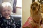 Une fillette de 3 ans disparaît pendant 24 heures et peut rentrer chez elle grâce au chien qui est resté avec elle