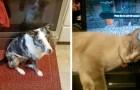 12 animales que han encontrado su rincón caliente y tibio fuera y dentro de la casa