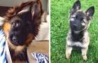 Video  Cachorros