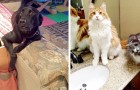 12 animals who were caught red-handed and immediately looked