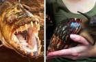 15 animaux dont on ne pensait pas qu'ils pouvaient devenir aussi gros