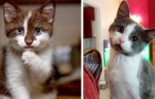 13 cats so cute that their owners couldn't help but take a picture of them