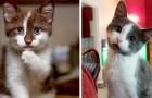 13 gatos tan tiernos que sus dueños no pudieron evitar hacerles una fotografía