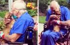 De oude man voelt zich niet lekker: zijn hond redt zijn leven door de aandacht van een man te trekken