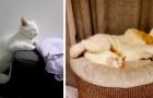 13 katter som valt att somna på de allra roligaste platserna och i de konstigaste ställningarna
