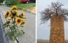 19 foto in cui la natura ha trovato il modo di crescere non curandosi dei limiti che cerchiamo di imporle
