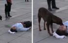 Un cane randagio conforta un attore che si stava fingendo ferito durante una rappresentazione teatrale