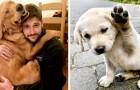 15 hundar som är så söta att de lyckades värma även de kallaste av hjärtan