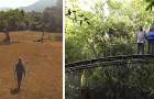 Ein Ehepaar kauft ein 120 Hektar großes Stück Land, um den Wald neu zu bepflanzen: Heute ist es ein riesiges Naturschutzgebiet