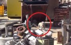 These 2 poor dogs had no hope of surviving in a Junkyard..untill these angels rescued them !