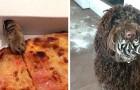 16 Tiere, die erwischt wurden, während sie Nahrung von ihren menschlichen Freunden stahlen