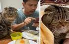 Eine Frau erzählt mit urkomischen Fotos, wie ihre Katze es geschafft hat, ihren Mann zu