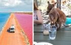Diese Bilder zeigen perfekt, warum Australien ein seltsamer und wunderbarer Ort ist...